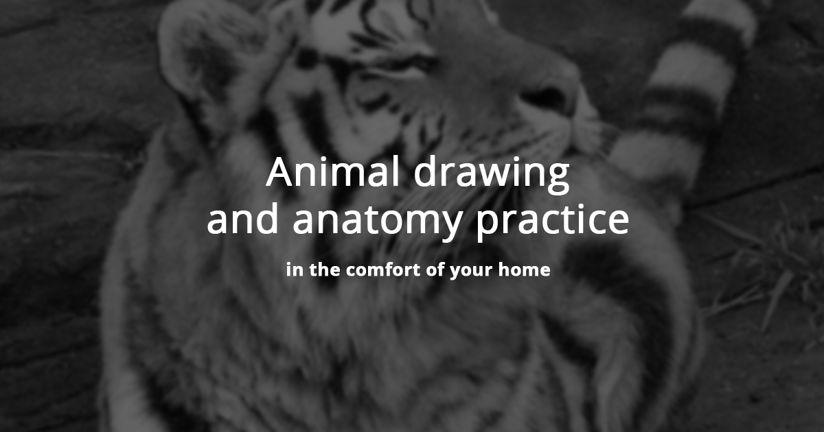 Animal Drawing Practice Tool For Artists of All Levels